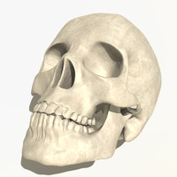 3ds anatomical human skull