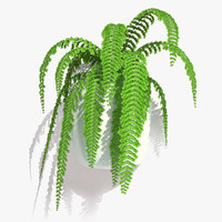 nephrolepis plant hanging pot max