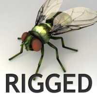 Rigged Fly