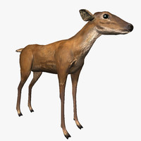 realistic deer 3ds