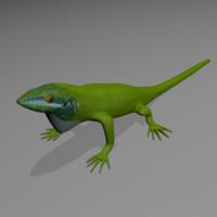 3d anole lizard model
