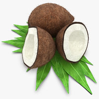 realistic coconut hair 3d model