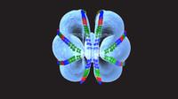 maya ctenophores animals marine
