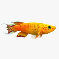 killifish fish obj