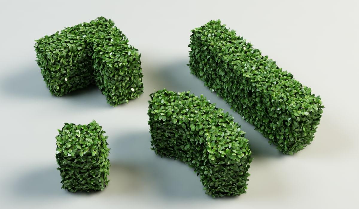 hedge_2.jpg