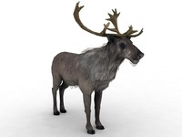 obj reindeer