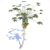 papaya tree 3d 3ds