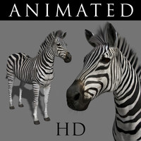 Photoreal HD Zebra