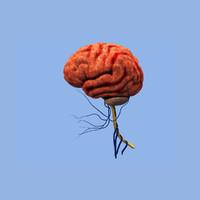 Real human brain