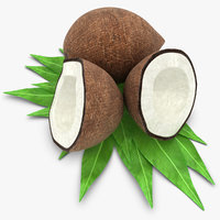 3d coconut coco nut model