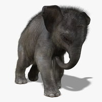 maya photorealistic baby elephant animation