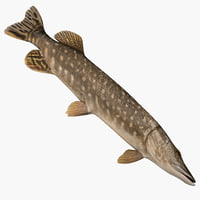 3ds max pike fish