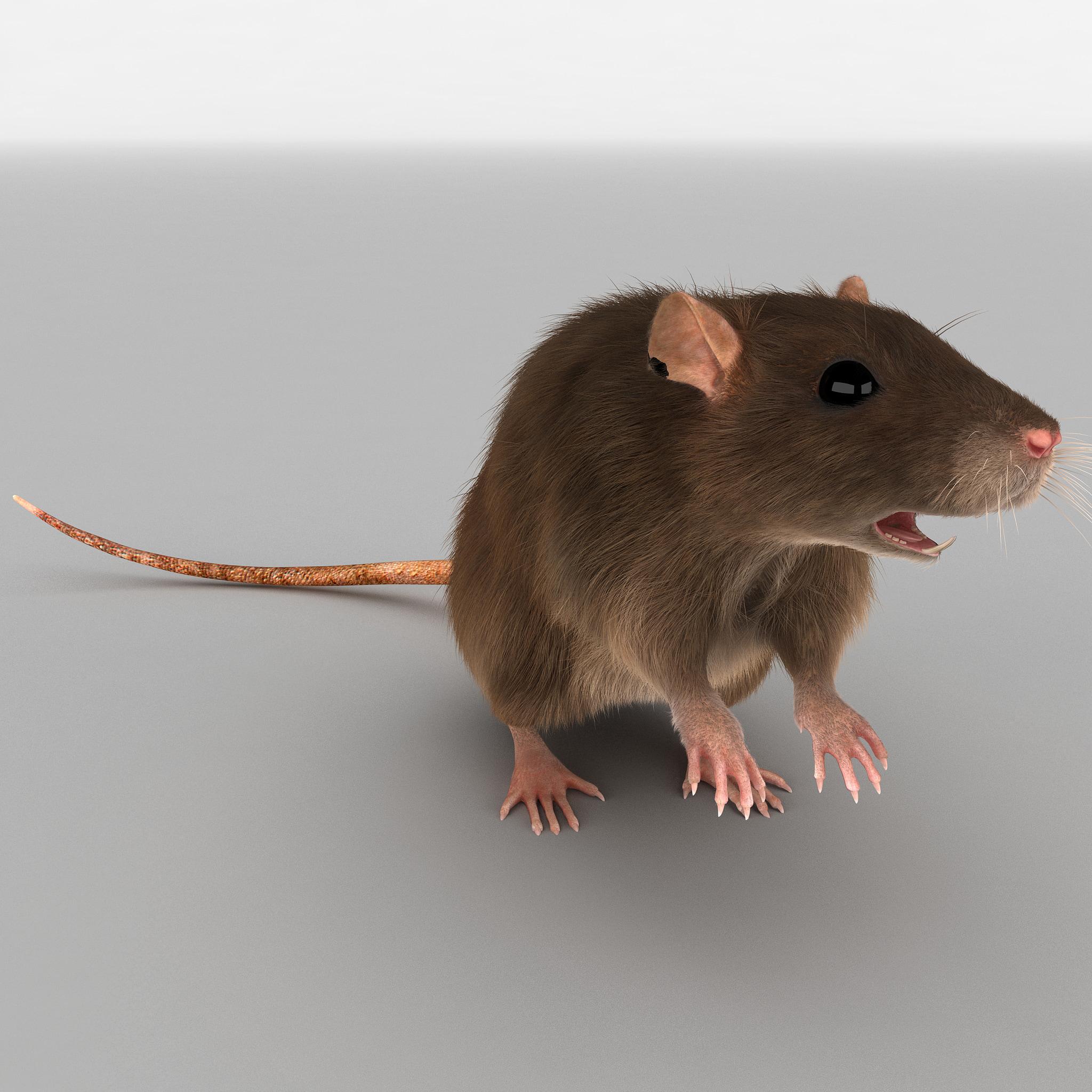 Rat Pose 2 Fur_74.jpg