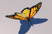 Animated Monarch Butterfly
