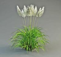 3d pampas grass model