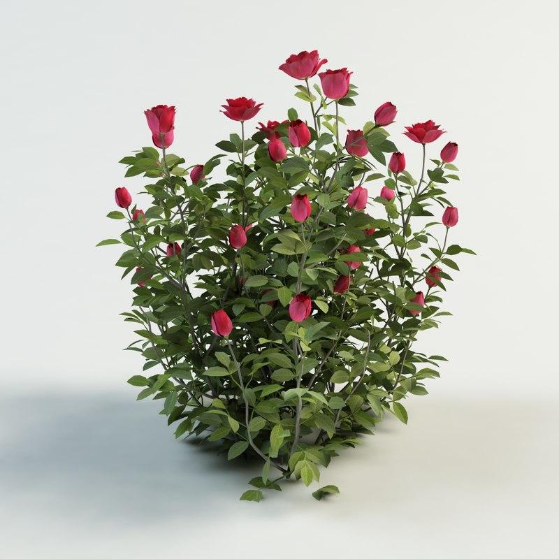 rose_1_010000.jpg