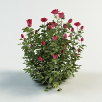 3d 3ds rose bush