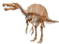 3dsmax dinosaur skeleton spinosaurus dino