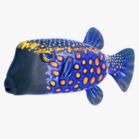 Blue Boxfish