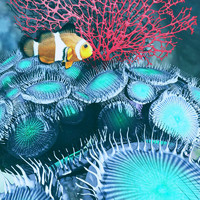 zoanthids coral 3d model