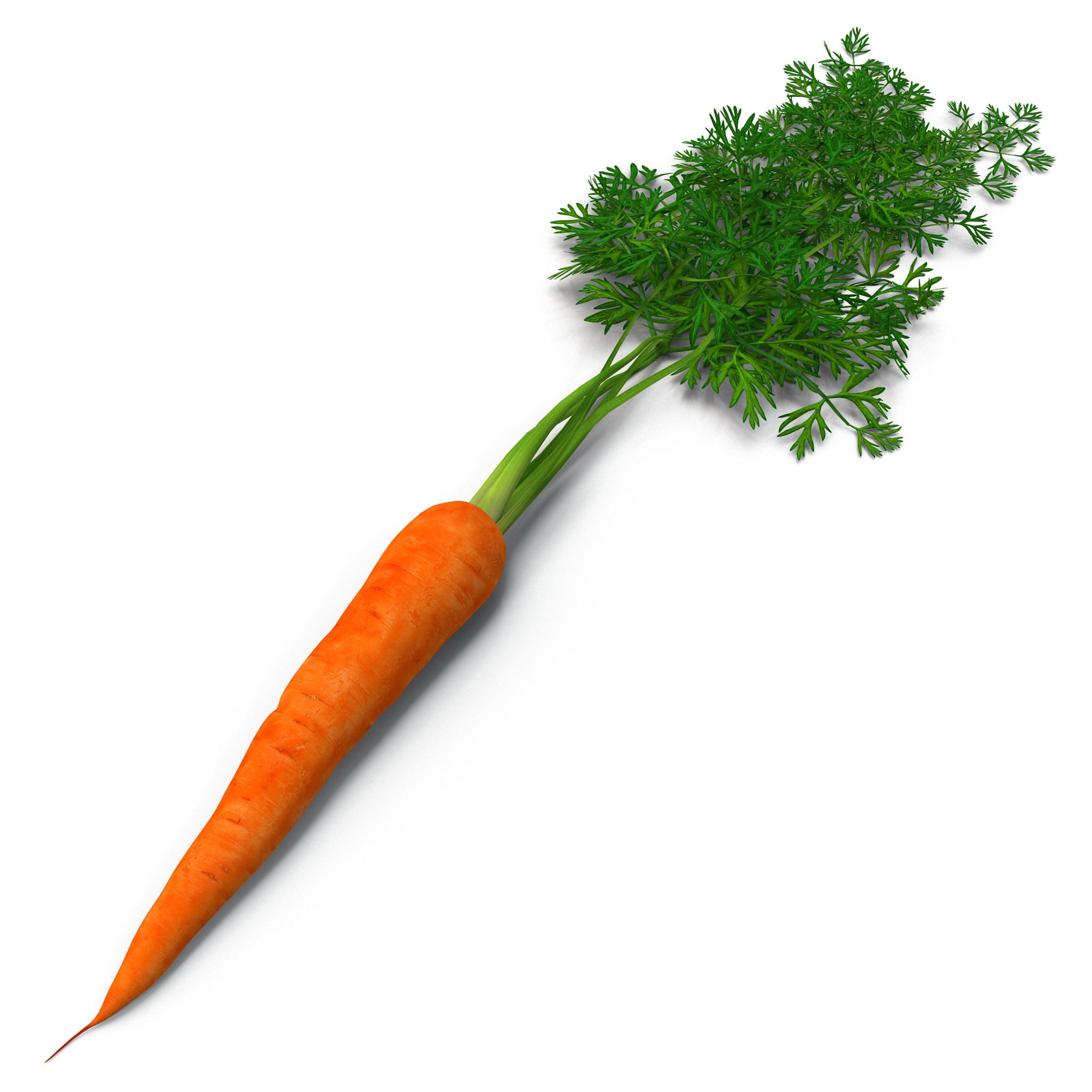 Carrot 2_94.jpg