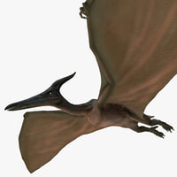 Pterodactyl Pose 1