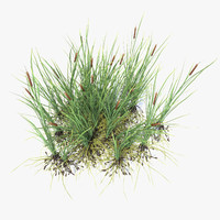 typha common bulrush 3d model