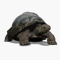 Tortoise (ANIMATED)