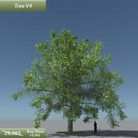maya tree oak v4