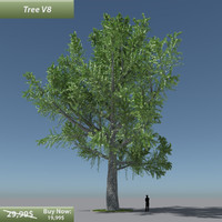 tree oak v8 obj