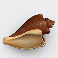 volema cochlidium black seashell 3d max