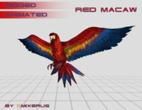 Red macaw animated