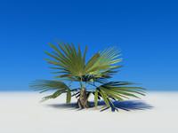 palm ma