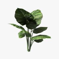 alien plant 3d model