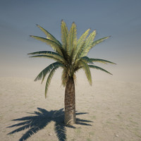 3d medium palm tree