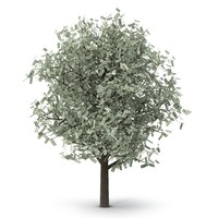 3d tree dollars