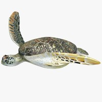 3d sea turtle animation model
