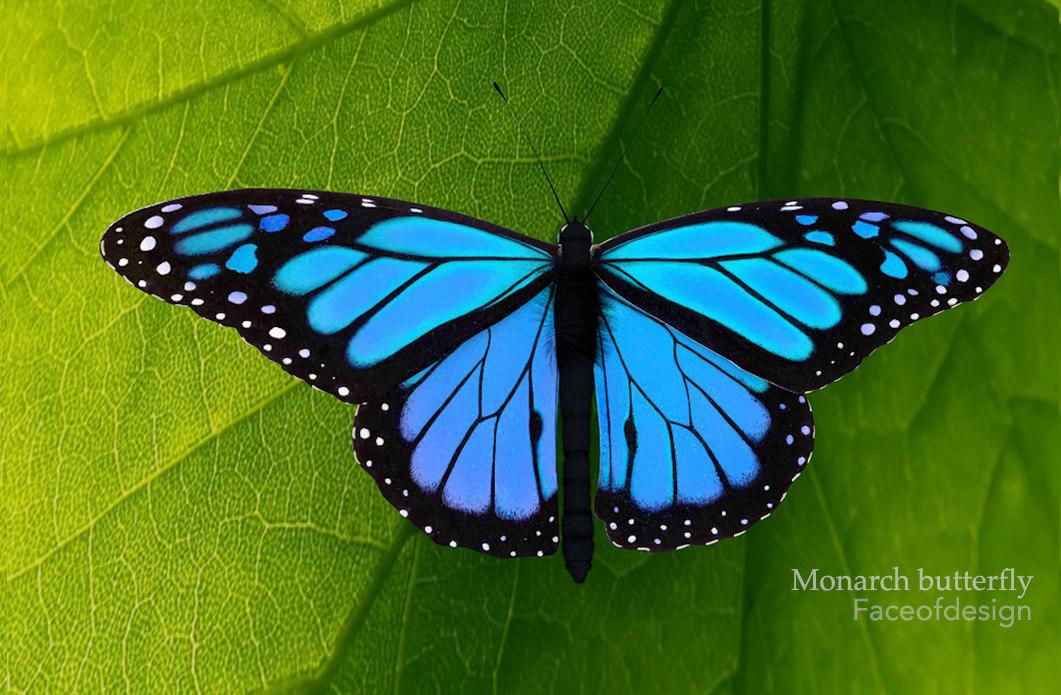 Blue03.jpg