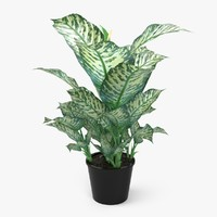 3d model of dieffenbachia picta plant