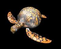 turtle 3d lwo