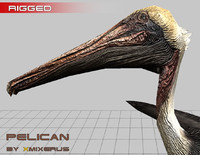 3d realistic pelican rigged