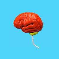 human brain c4d