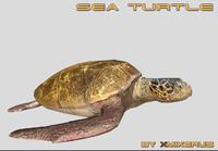 3dsmax realistic turtle