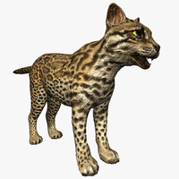 3d model ocelot ready rendered