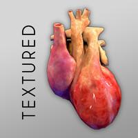 human heart bumpmap 3d model