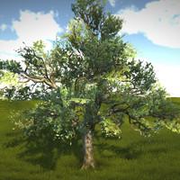3d real time lod tree oak model