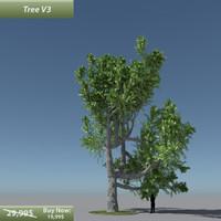 max tree oak v7