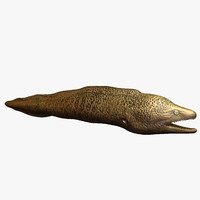 3d eel ready rendered model