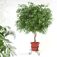 3d ficus forged model