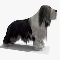 3d bearded collie dog model